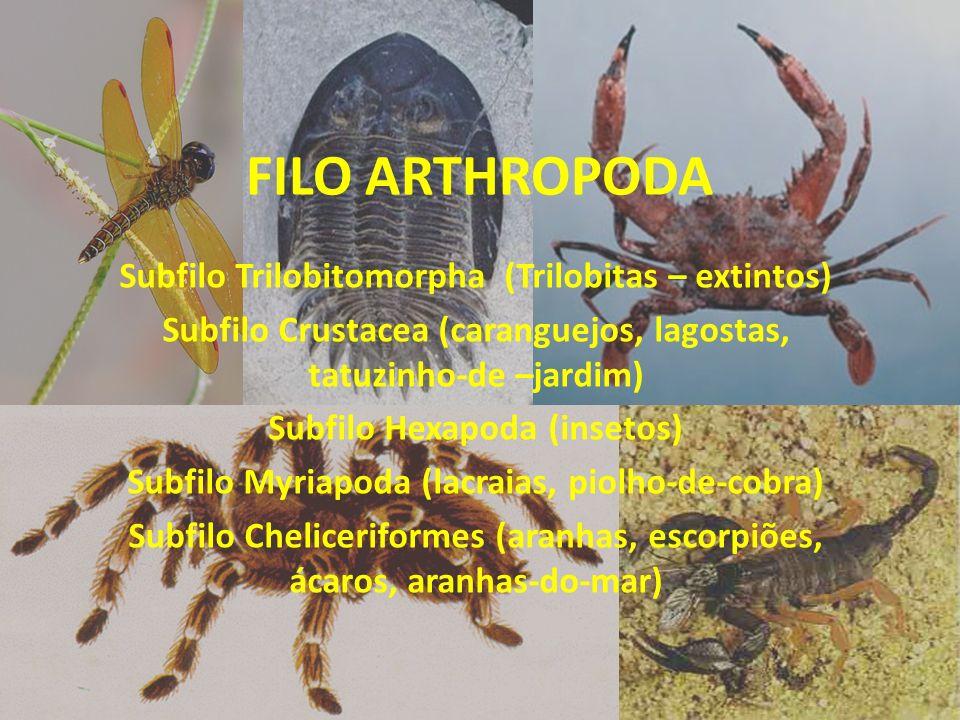 FILO ARTHROPODA Subfilo Trilobitomorpha (Trilobitas – extintos)