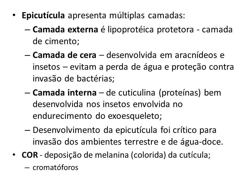 Epicutícula apresenta múltiplas camadas: