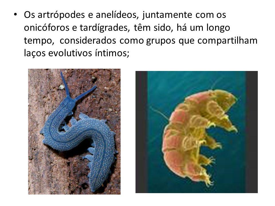 Os artrópodes e anelídeos, juntamente com os onicóforos e tardígrades, têm sido, há um longo tempo, considerados como grupos que compartilham laços evolutivos íntimos;
