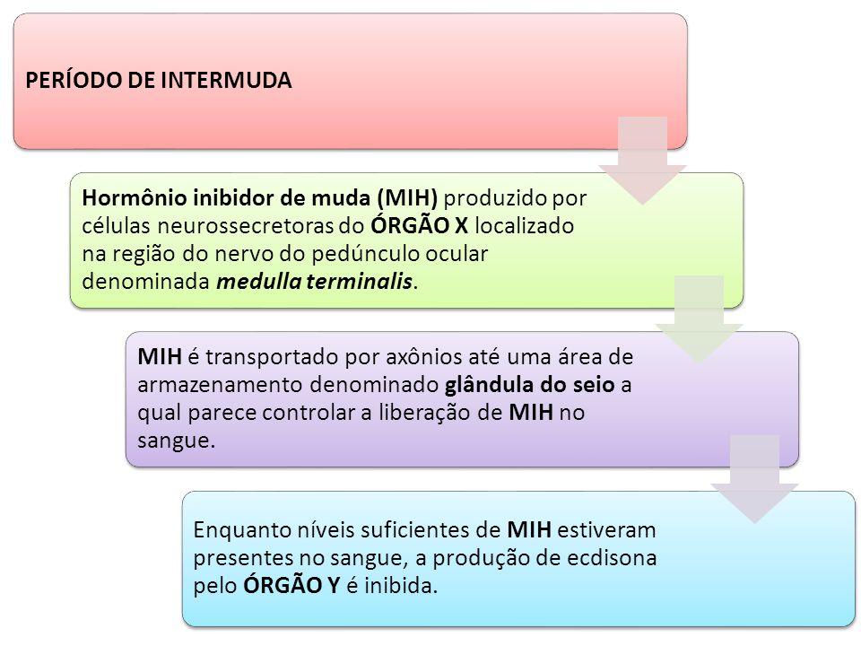 PERÍODO DE INTERMUDA