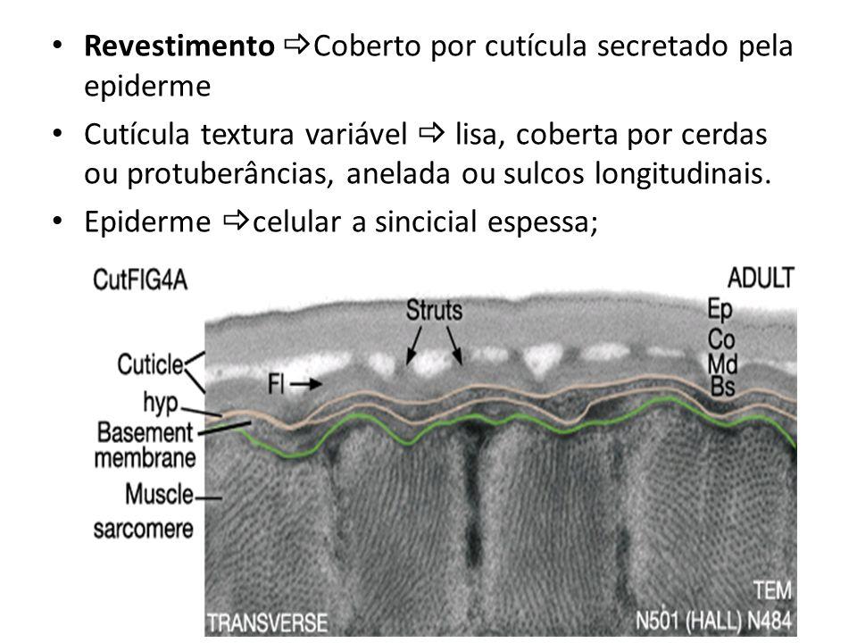 Revestimento Coberto por cutícula secretado pela epiderme