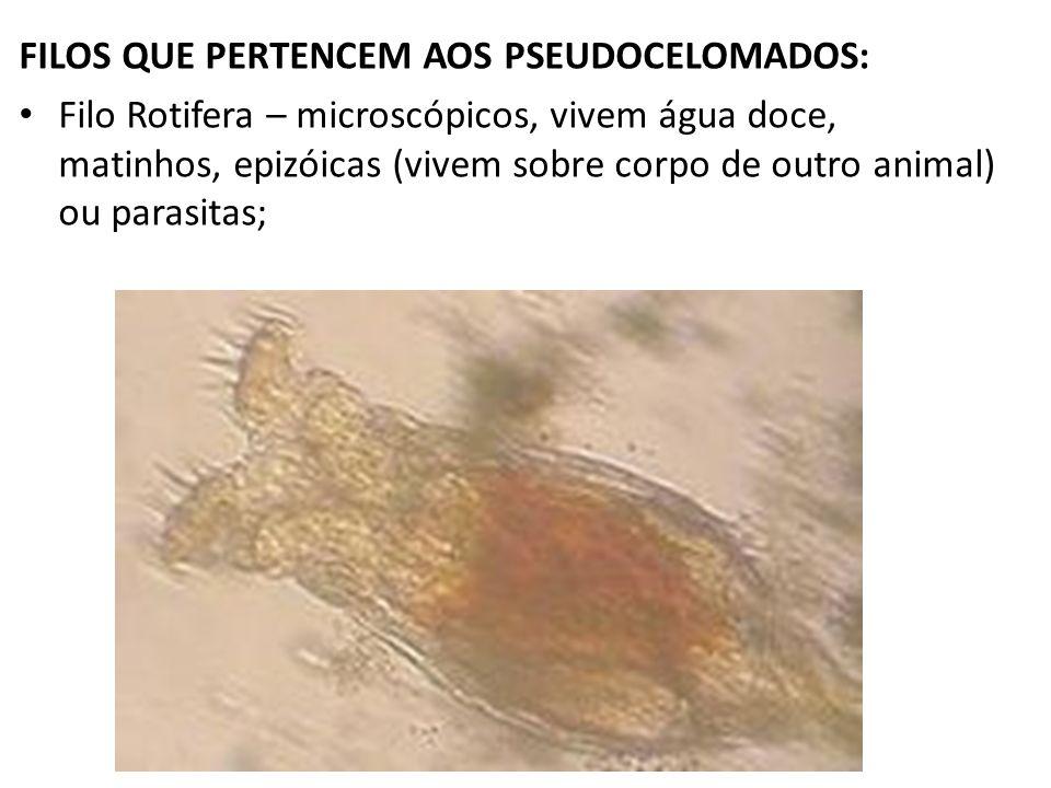 FILOS QUE PERTENCEM AOS PSEUDOCELOMADOS: