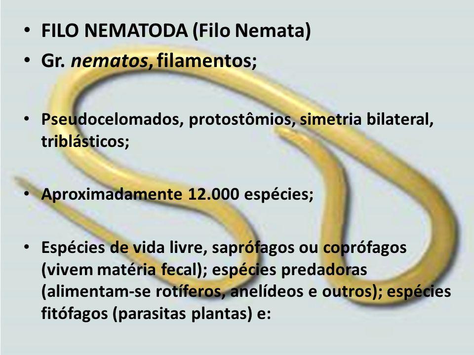 FILO NEMATODA (Filo Nemata) Gr. nematos, filamentos;
