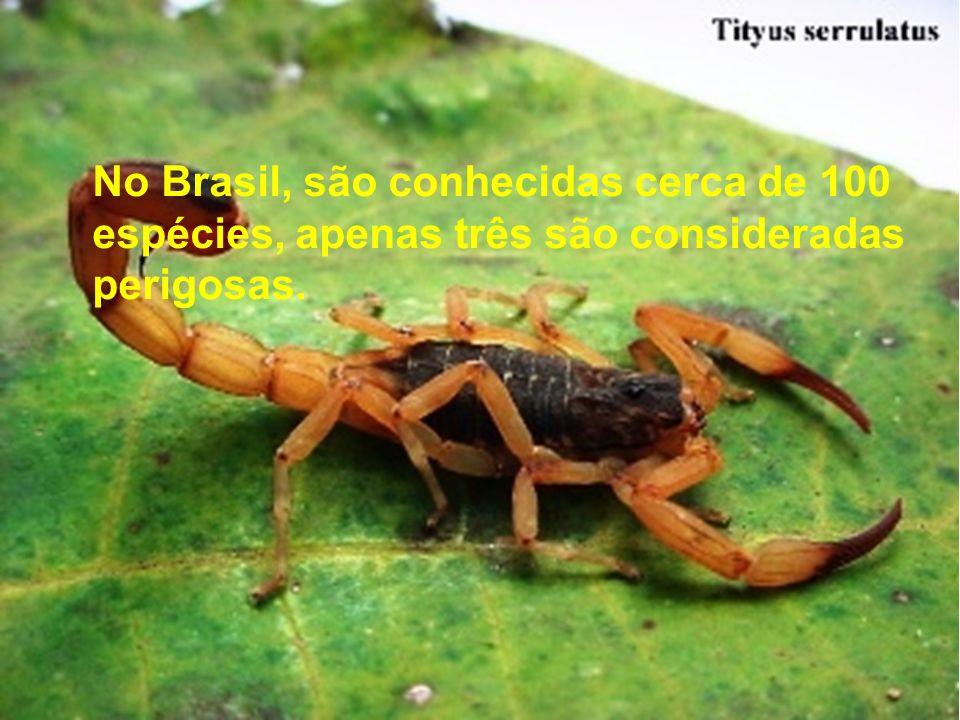 No Brasil, são conhecidas cerca de 100 espécies, apenas três são consideradas perigosas.