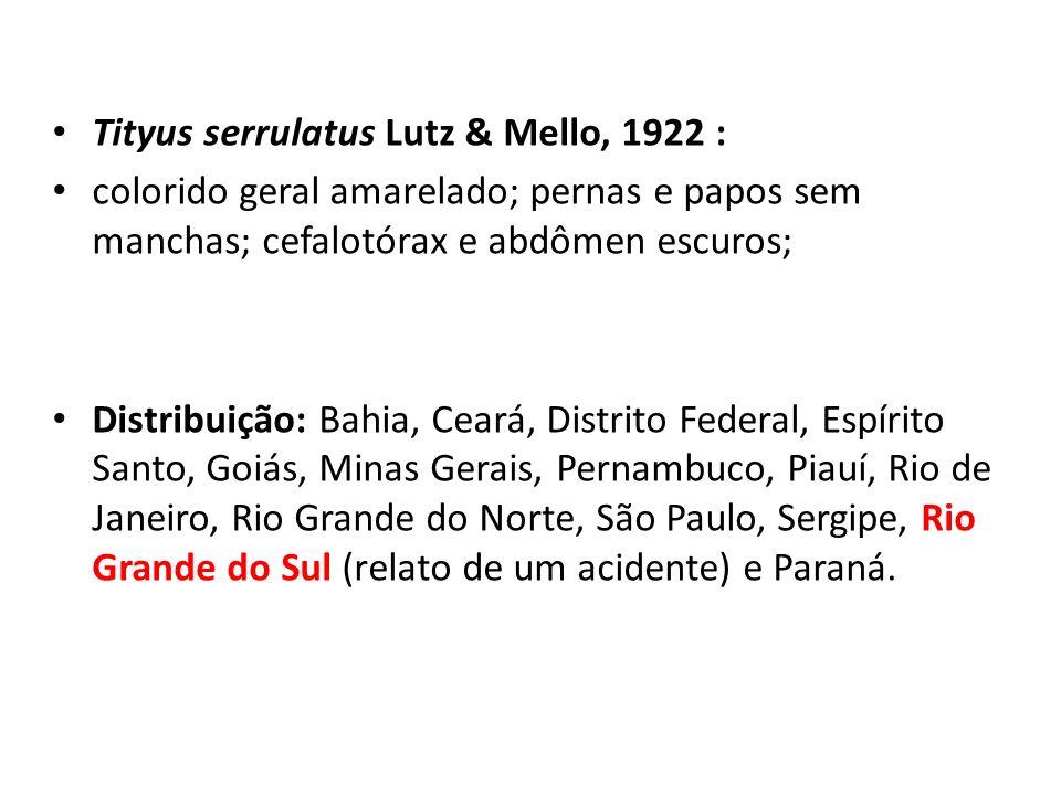 Tityus serrulatus Lutz & Mello, 1922 :