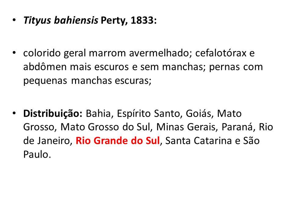 Tityus bahiensis Perty, 1833: