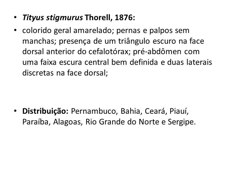 Tityus stigmurus Thorell, 1876: