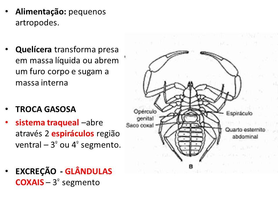Alimentação: pequenos artropodes.