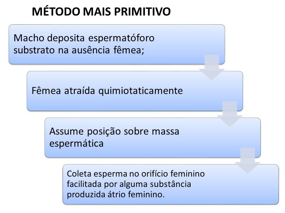 MÉTODO MAIS PRIMITIVO Macho deposita espermatóforo substrato na ausência fêmea; Fêmea atraída quimiotaticamente.