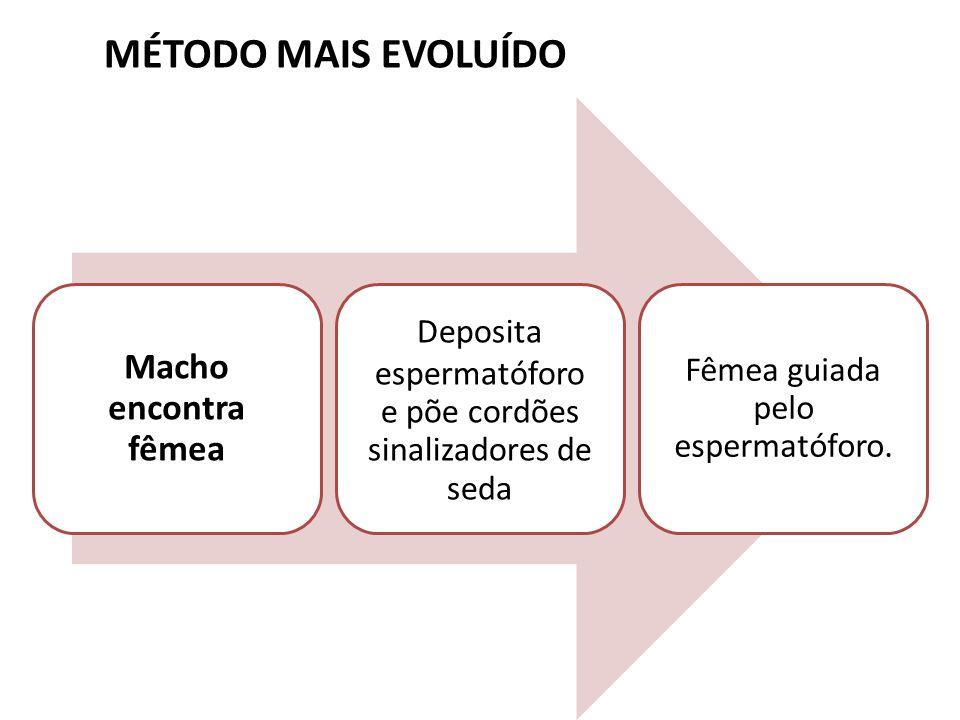 MÉTODO MAIS EVOLUÍDO Macho encontra fêmea