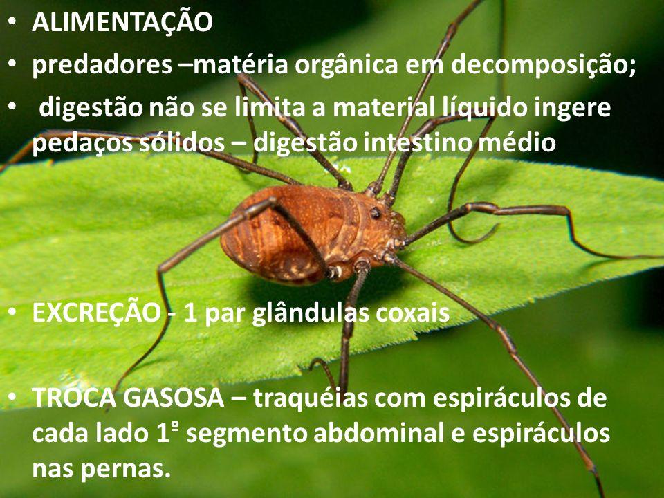 ALIMENTAÇÃO predadores –matéria orgânica em decomposição;