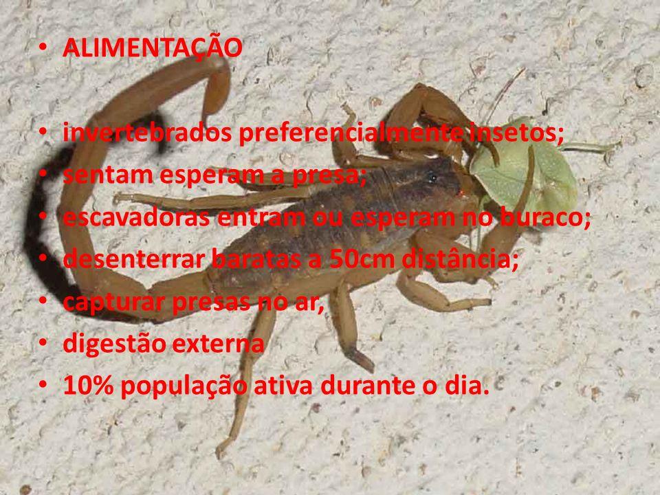 ALIMENTAÇÃO invertebrados preferencialmente insetos; sentam esperam a presa; escavadoras entram ou esperam no buraco;