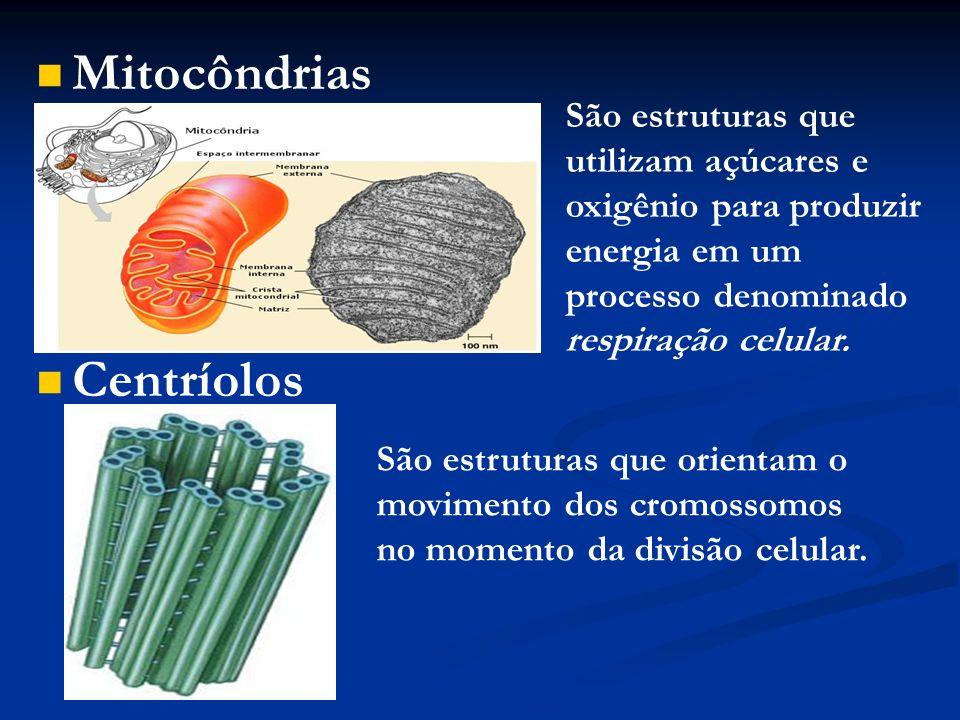 Mitocôndrias Centríolos