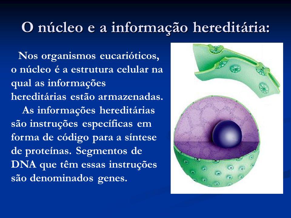 O núcleo e a informação hereditária: