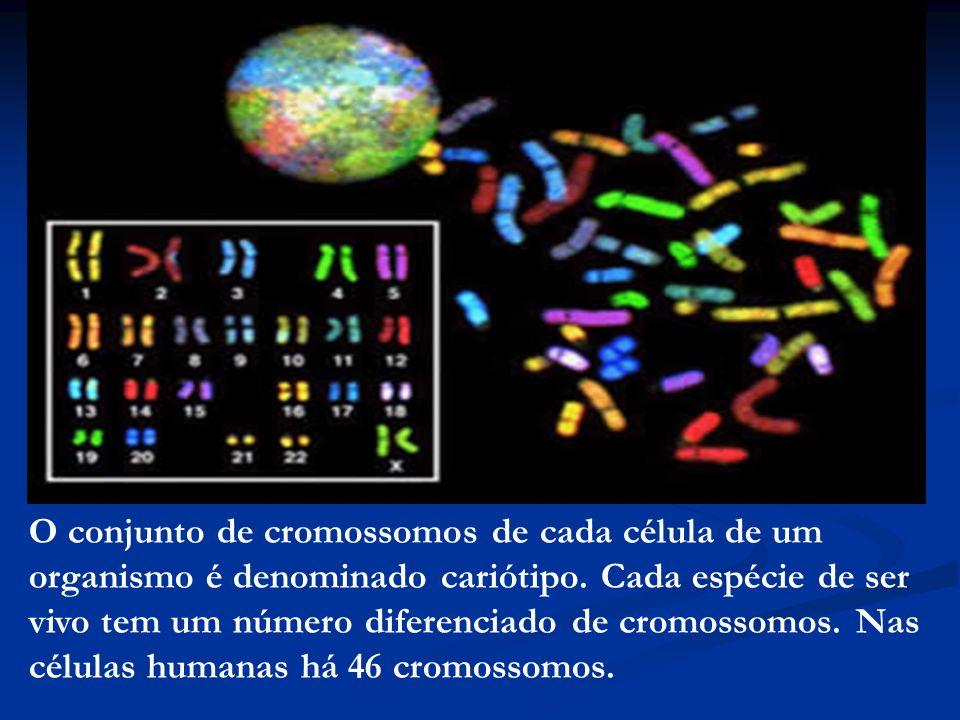 O conjunto de cromossomos de cada célula de um organismo é denominado cariótipo.