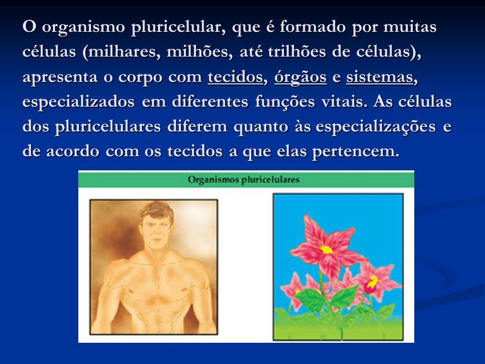 O organismo pluricelular, que é formado por muitas células (milhares, milhões, até trilhões de células), apresenta o corpo com tecidos, órgãos e sistemas, especializados em diferentes funções vitais.