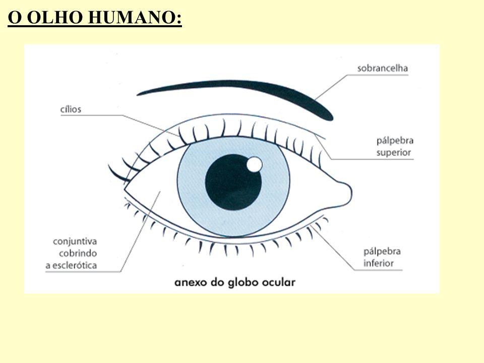 O OLHO HUMANO: