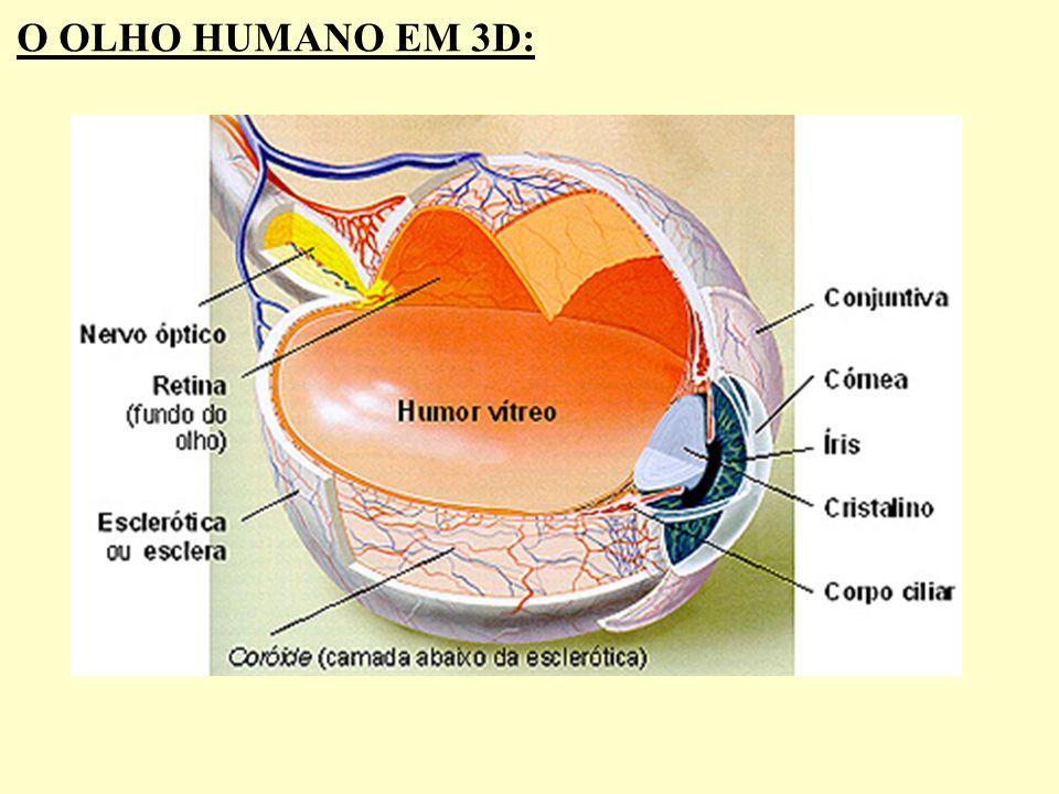 O OLHO HUMANO EM 3D: