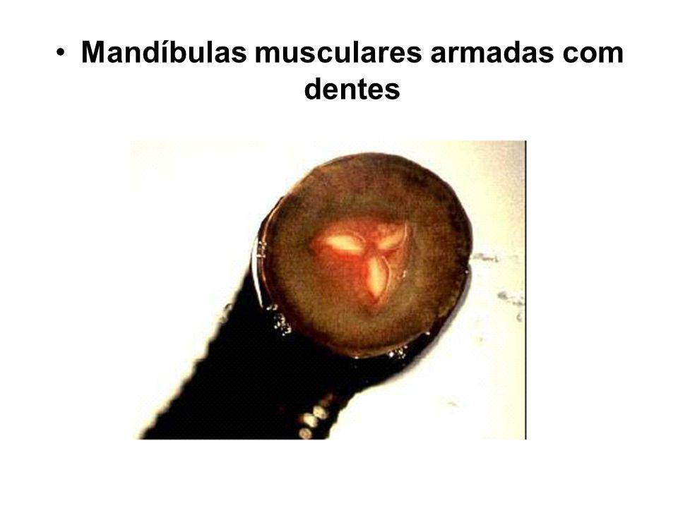 Mandíbulas musculares armadas com dentes