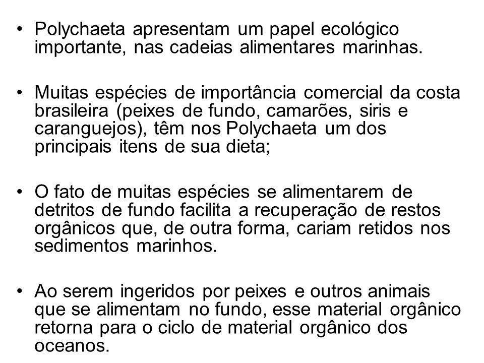 Polychaeta apresentam um papel ecológico importante, nas cadeias alimentares marinhas.
