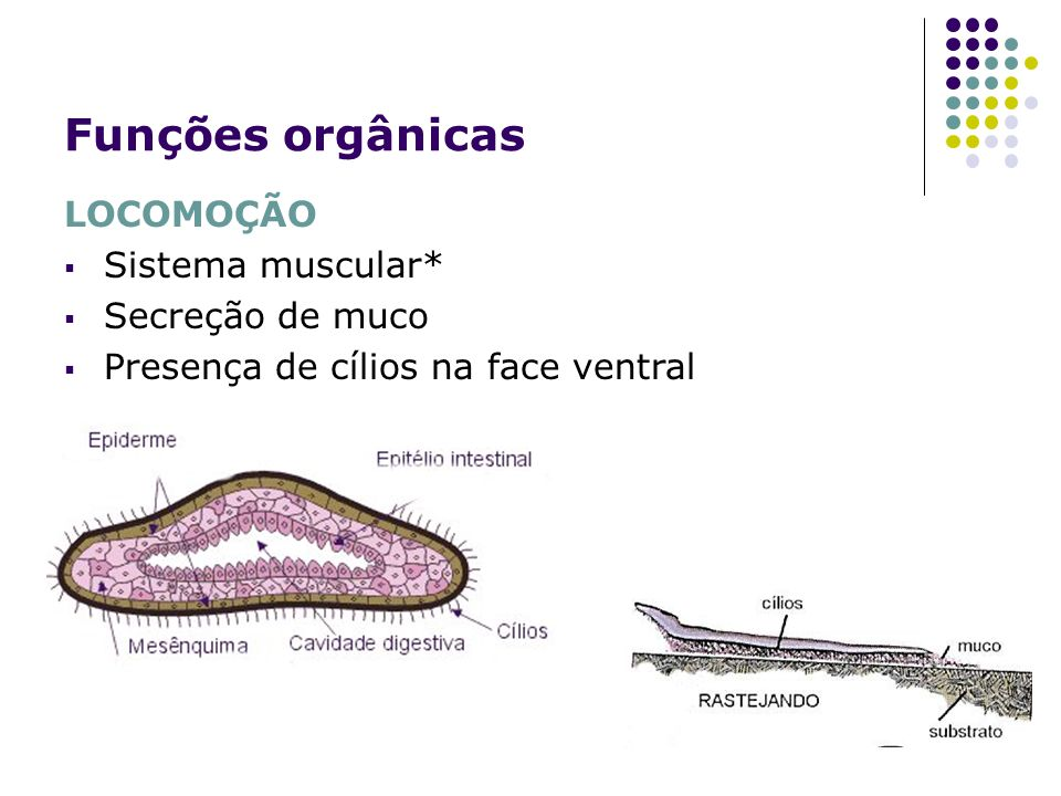 Funções orgânicas LOCOMOÇÃO Sistema muscular* Secreção de muco