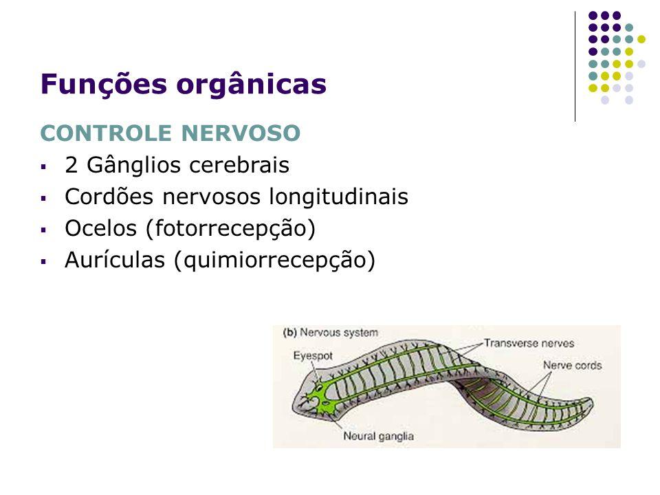 Funções orgânicas CONTROLE NERVOSO 2 Gânglios cerebrais
