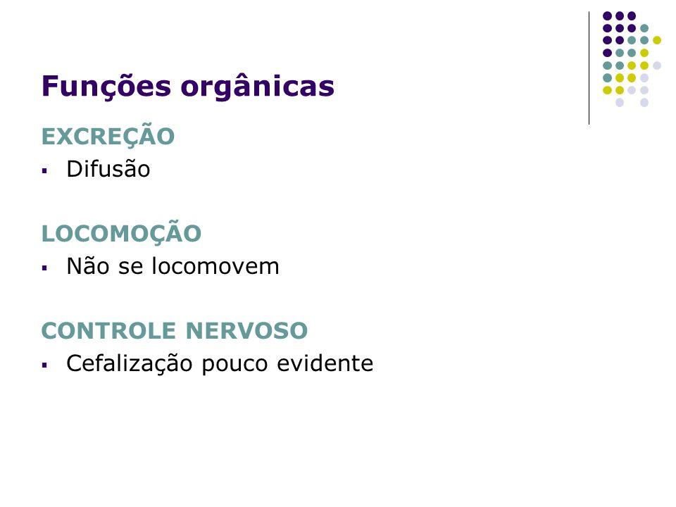 Funções orgânicas EXCREÇÃO Difusão LOCOMOÇÃO Não se locomovem