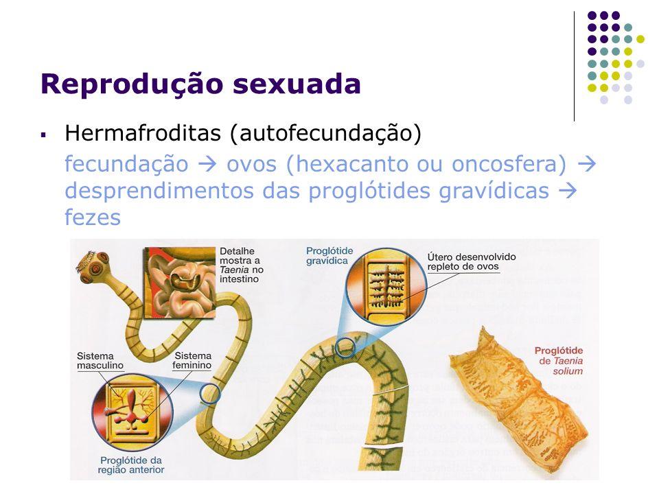 Reprodução sexuada Hermafroditas (autofecundação)