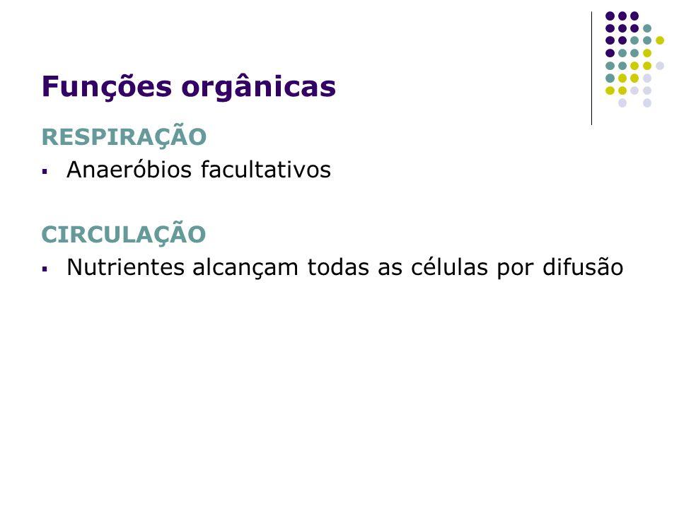Funções orgânicas RESPIRAÇÃO Anaeróbios facultativos CIRCULAÇÃO