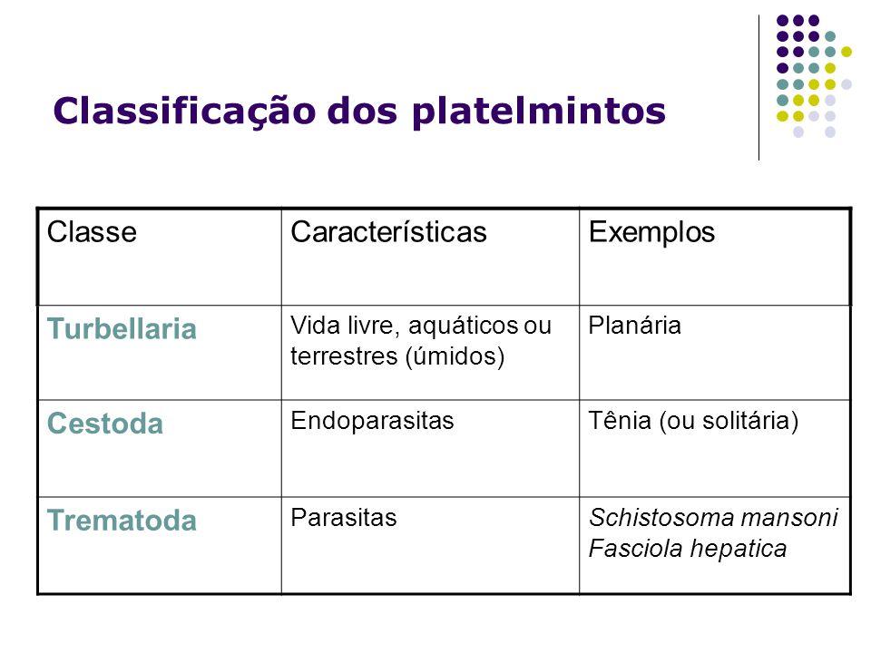 Classificação dos platelmintos