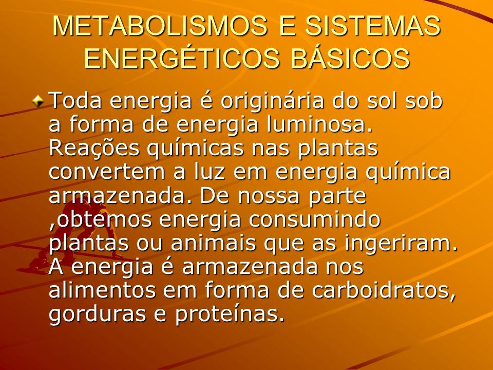 METABOLISMOS E SISTEMAS ENERGÉTICOS BÁSICOS