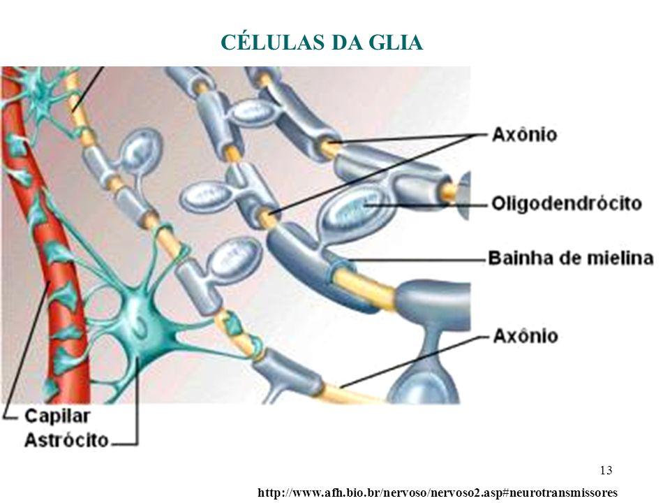 CÉLULAS DA GLIA http://www.afh.bio.br/nervoso/nervoso2.asp#neurotransmissores