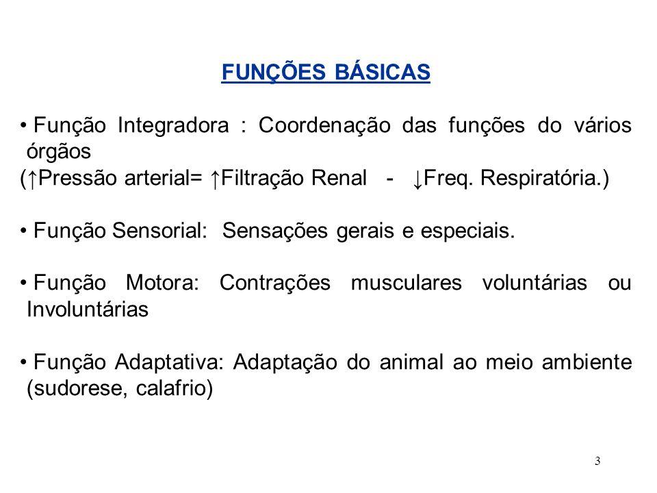 FUNÇÕES BÁSICAS Função Integradora : Coordenação das funções do vários órgãos. (↑Pressão arterial= ↑Filtração Renal - ↓Freq. Respiratória.)