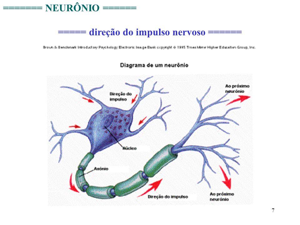 ===== direção do impulso nervoso ======