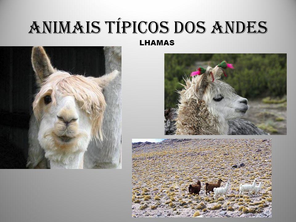 Animais típicos dos Andes