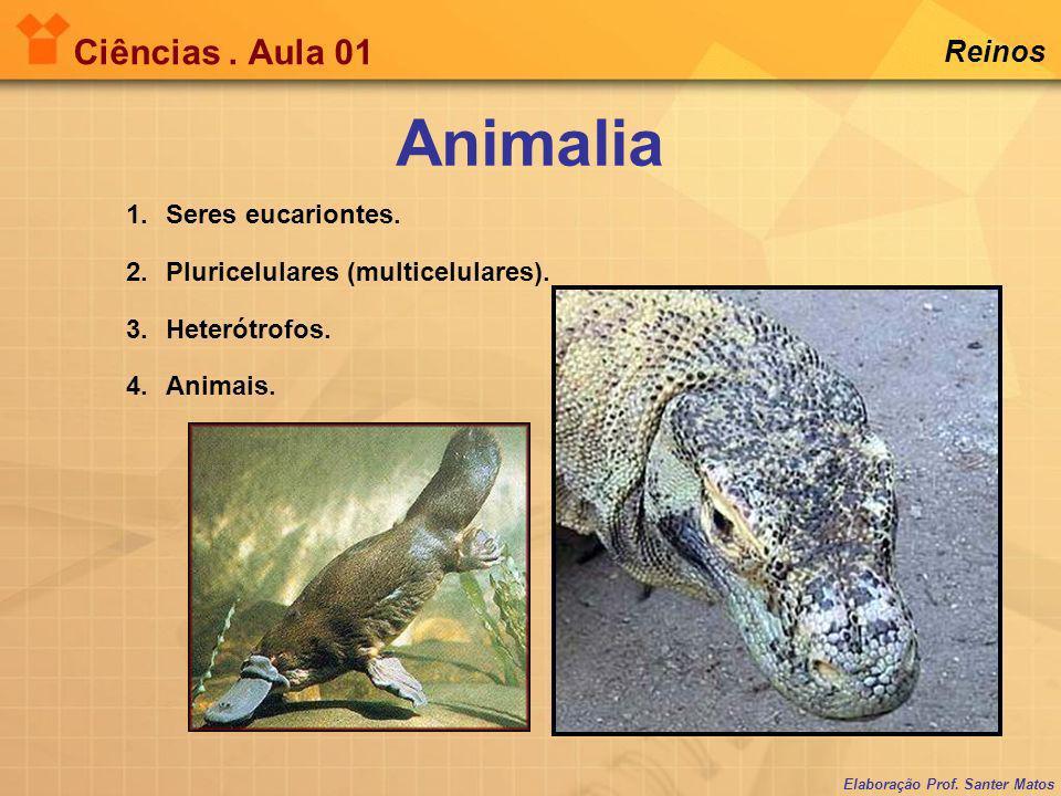 Animalia Ciências . Aula 01 Reinos Seres eucariontes.