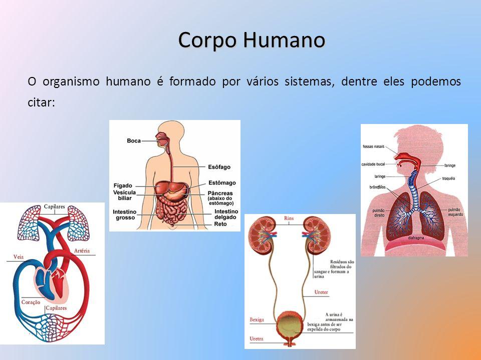 Corpo Humano O organismo humano é formado por vários sistemas, dentre eles podemos citar: