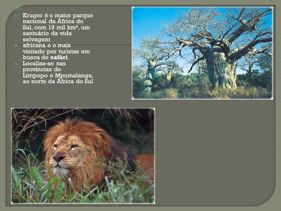 Kruger é o maior parque nacional da África do Sul, com 19 mil km², um santuário da vida selvagem.