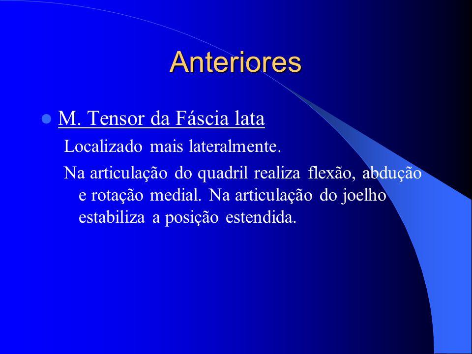 Anteriores M. Tensor da Fáscia lata Localizado mais lateralmente.