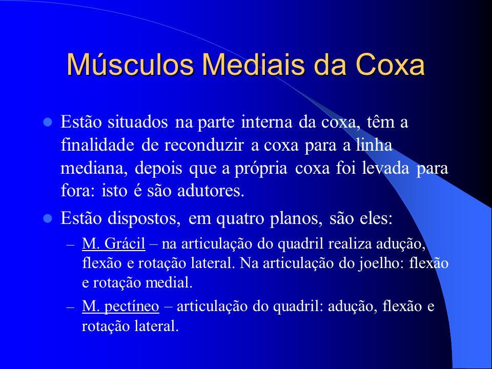 Músculos Mediais da Coxa