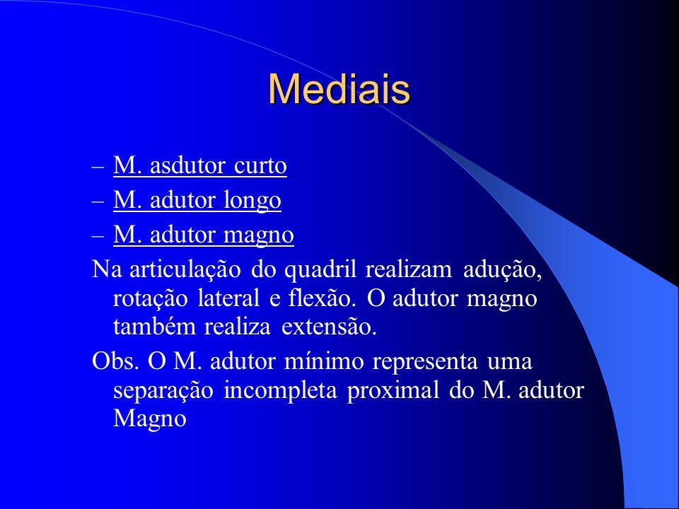 Mediais M. asdutor curto M. adutor longo M. adutor magno