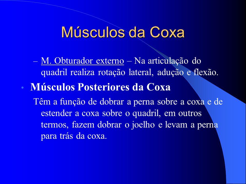 Músculos da Coxa Músculos Posteriores da Coxa