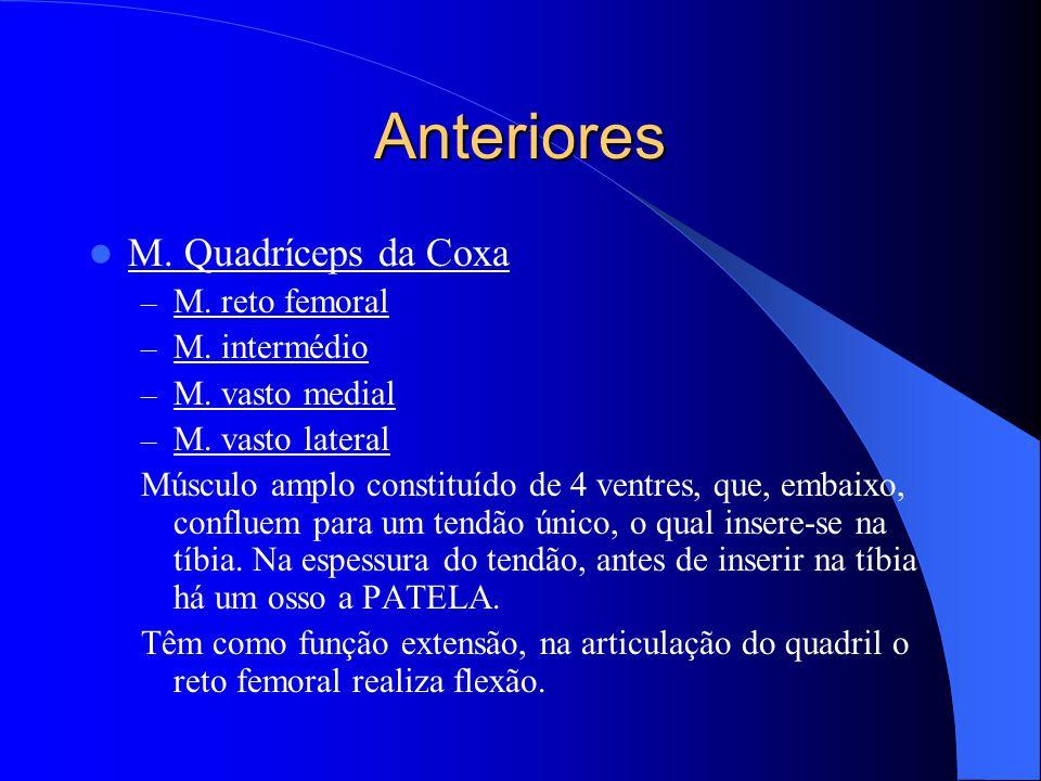 Anteriores M. Quadríceps da Coxa M. reto femoral M. intermédio