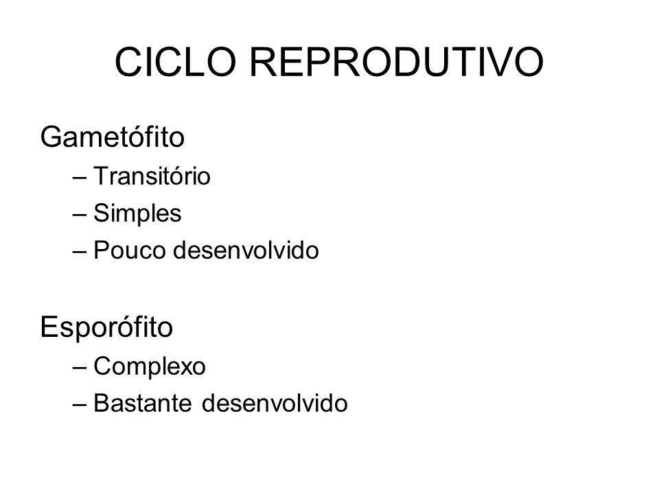 CICLO REPRODUTIVO Gametófito Esporófito Transitório Simples