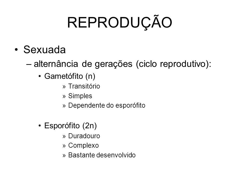 REPRODUÇÃO Sexuada alternância de gerações (ciclo reprodutivo):