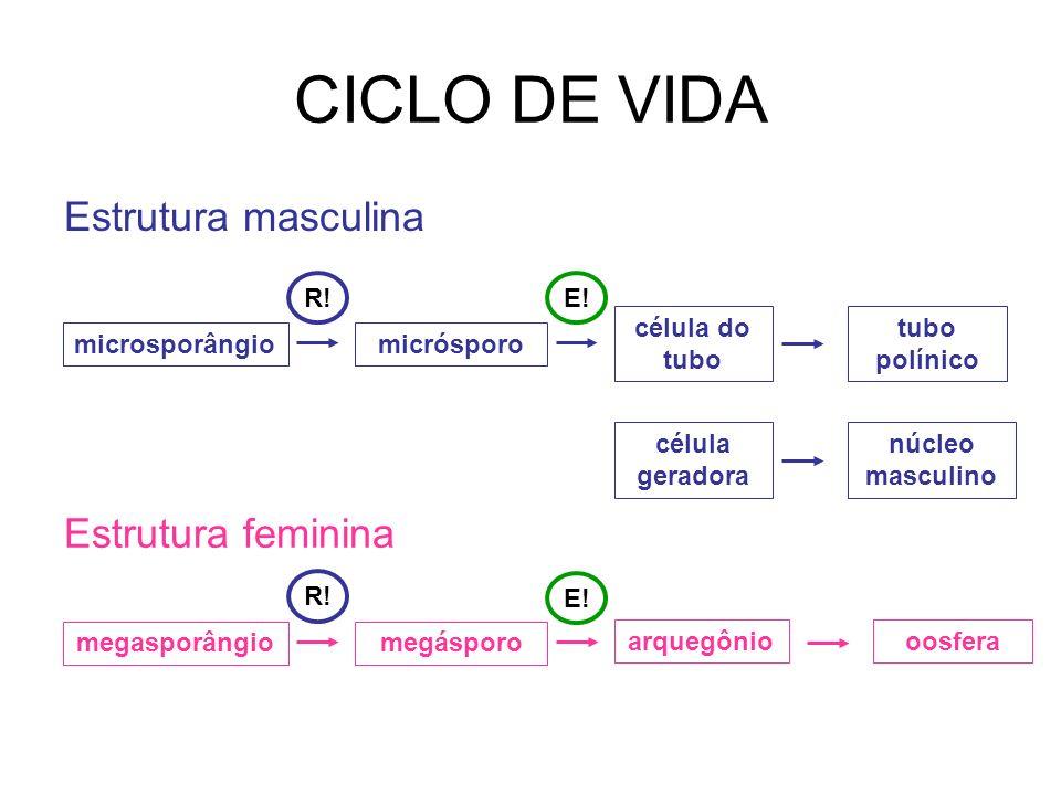 CICLO DE VIDA Estrutura masculina Estrutura feminina R! E!