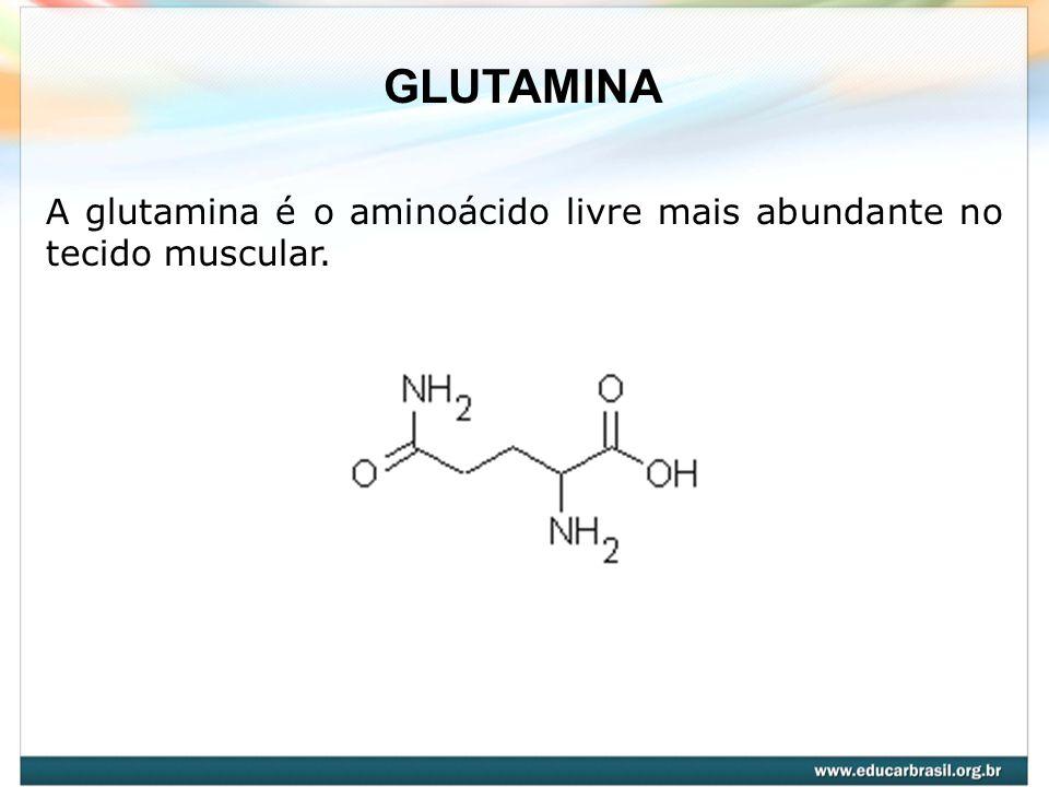 GLUTAMINA A glutamina é o aminoácido livre mais abundante no tecido muscular.