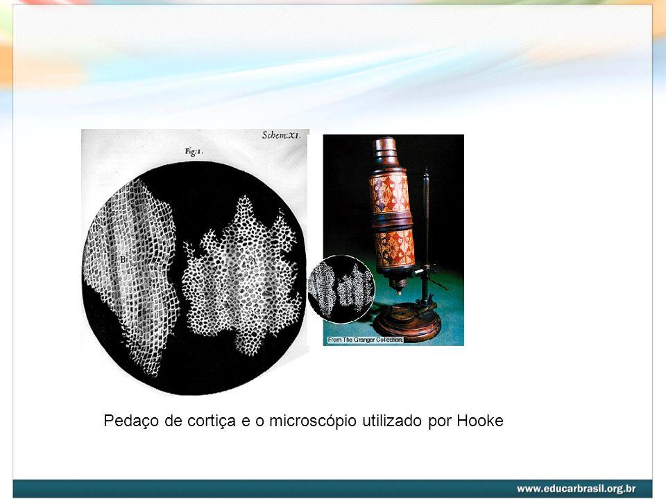 Pedaço de cortiça e o microscópio utilizado por Hooke