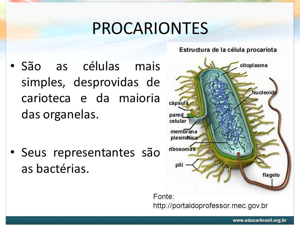 PROCARIONTES São as células mais simples, desprovidas de carioteca e da maioria das organelas. Seus representantes são as bactérias.