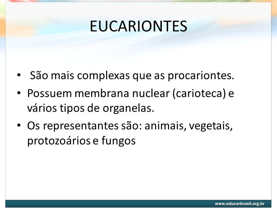 EUCARIONTES São mais complexas que as procariontes.